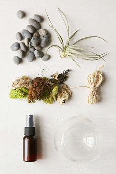 Makerskit DIY Hanging Air Plant Terrarium Kit - Urban Outfitters