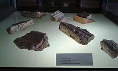 Reperti archeologici in mostra al Museo Civico    Duecento esemplari di minerali all'interno della area museale di Rio Nell'Elba Da Qui News Elba, 13 agosto 2014