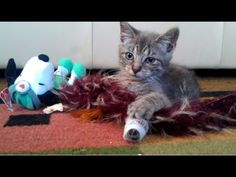 kitty update: amazing recovery