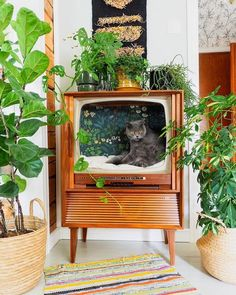 Repurposed old TV used as a cat chillatorium (by Keltainen kahvipannu) : aww