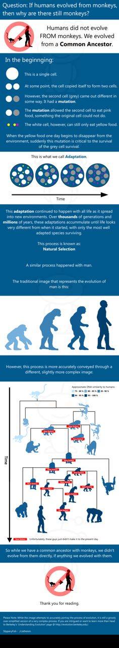 Humans did NOT evolve from monkeys. They evolved from a COMMON ANCESTOR. #evolution
