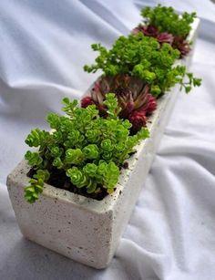 Beautiful arrangement of succulents Cacti And Succulents, Potted Plants, Garden Plants, House Plants, Modern Floral Design, Concrete Stone, Garden Spaces, Event Design, Outdoor Living