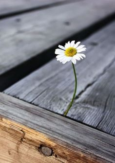 We believe that this flower can represent hope. For in the smallest place something beautiful can grow.