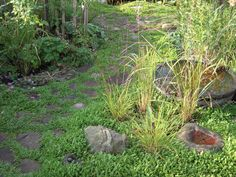 Garden pathway with stones and Cotula