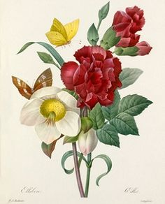 RHS flowers