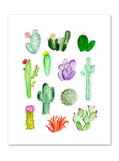 'Cacti Study' by Shannon Kirsten. Prints on @buddyeditions