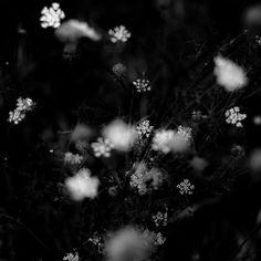 https://flic.kr/p/LRqn88   Summer Wildflowers 026   little ones, hiding