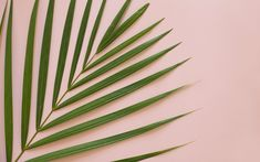 palm love | freebies | desktop wallpapers | tropical