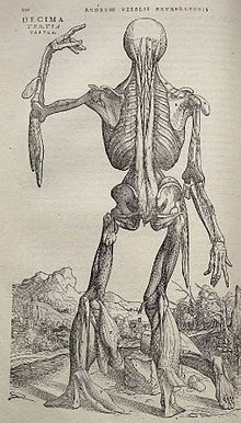 9 best Andreas Vesalius 1514-1564 images on Pinterest | Andreas ...