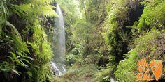 Los Tilos #LaPalmaIsland #Canaryislands #trekking #excursions #cascade | La Palma Natural Tilos, Waterfall, Spain, River, Island, Natural, Outdoor, Las Palmas, Scenery