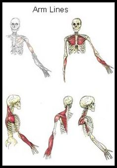 Anatomy Train Lines