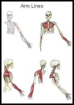 Anatomy Train Lines