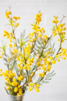Mimosa flowers. Yellow table decoration. Women's day gift. Spring is coming soon