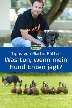 Hundeprofi Martin Rütter beantwortet eure Fragen rund um die Mensch-Hund-Beziehung, zu Training, Erziehung, Bindung und Hundehaltung. Heute: Was tun, wenn mein Hund Enten jagt? Jetzt anhören. #hundeerziehung #hundesprache #hundetraining #hundeprofi #jagdtrieb Dog Biscuits, Hound Dog, Dog Care, Guinea Pigs