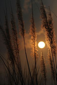 astronomy - Gorgeous Harvest Moon Photos That Will Make You Love Autumn Mega Memes LOL Moon Photos, Moon Pictures, Nature Pictures, Sunset Wallpaper, Nature Wallpaper, Wallpaper Backgrounds, Amazing Photography, Landscape Photography, Nature Photography
