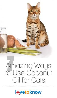 Coconut oil has recently gained notoriety as a 'superfood' with a variety of health benefits for people, you can also use food-grade coconut oil on cats to treat a variety of conditions and symptoms. From adding moisture to your kitty's skin to improving brain power in your older cat, there are some great uses for this natural remedy. #cat #cats #coconutoil   7 Amazing Ways to Use Coconut Oil for Cats from #LoveToKnow
