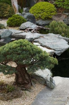 Peacefully Japanese Zen Gardens Landscape for Your Inspirations - Rockindeco Peacefully Japanese Zen Garden Gallery Inspirations 49 Japanese Garden Plants, Japan Garden, Japanese Garden Design, Japanese Landscape, Japanese Gardens, Chinese Garden, Backyard Garden Design, Backyard Landscaping, Landscaping Ideas