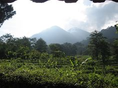 The Seloliman Nature Reserve is situated on the slopes of the sacred Penanggungan volcano – Eastern Java – Indonesia.