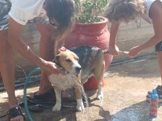 That's my dad and Tim giving me a bath. It's tough to keep me clean!