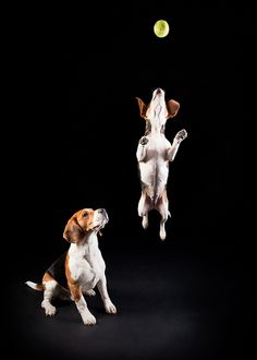 All sizes | Beagle Envy… | Flickr - Photo Sharing!