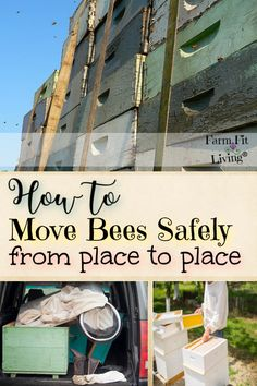 If your wanting to move bees safely in their hives from one place to another, here's what you need to know. Harvesting Honey, Bee Safe, Beekeeping For Beginners, Raising Bees, Natural Ecosystem, Homestead Farm, Country Lifestyle, First Place, Live Fit