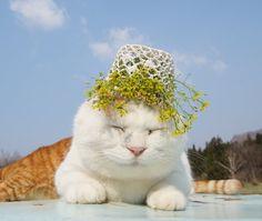 のせ猫 犬薺 |のせ猫オフィシャルブログ Powered by Ameba