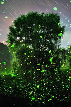 bobbycaputo: These Photos of Fireflies Are Straight From a...