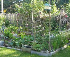 cute vegetable plot