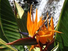 bird of paradise Paradise, Bird, Plants, Photography, Photograph, Birds, Photo Shoot, Plant, Fotografie