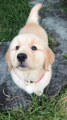 A good pupper! http://ift.tt/2rkeRvM
