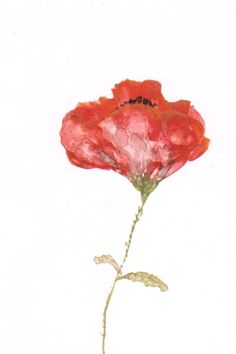 Red Poppy Art Original  Painting  Watercolor  4x6 by mallalu, $57.00