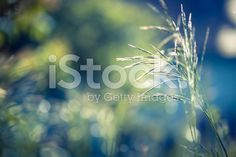 Wildflower background royalty-free stock photo