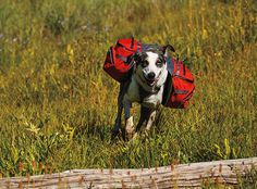 Palisades Pack™ - Ultimate Backcountry Dog Pack