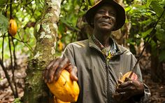 Man in cocoa field Working with Fairtrade is a great way to show your support for farmers and producers around the world.