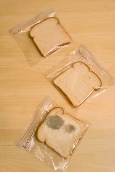 This bread mold experiment will help your child learn about mold, and he'll develop important hypothesis-making and experiment-designing skills.