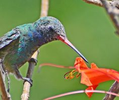 Breaking the petal Photo by Franck S Vega -- National Geographic Your Shot