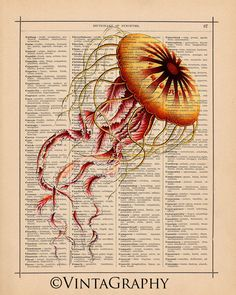 Jellyfish print on book page.