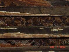 bats-in-attic #Bats #BatRemoval (226) 600-5597 Ontario, Canada