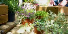 9 Gardening Diagrams