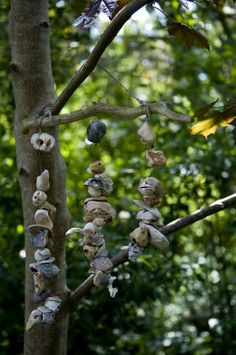rock & shell wind chime on a branch, I made this before