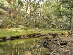 Capertee National Park offers spectacular birdwatching, walking, camping as well as heritage homestead accommodation, west of Blue Mountains, near Lithgow. Maybe One Day, Blue Mountain, Bird Watching, The Good Place, Golf Courses, Places To Go, National Parks, Australia, Camping