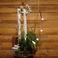 kerst, Rudolf duo