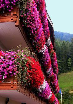 Flower balconies in Trentino, South Tyrol, Italy Trentino alto Adige region
