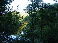 Vegetación de ribera, #río Uncin, playa de la Concha de Artedo, Cudillero, Asturias