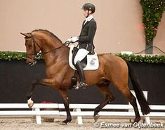 The 4-year old Expression, the 5-year old Don Tango B and the 6-year old Cupido won the fourth and final leg of the 2013-2014 KWPN Stallion Competition qualification circuit of which the Finals will be held during the 2014 KWPN Stallion Licensing in February.
