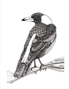 Australian magpie pattern art drawing by DamselsDesigns on Etsy …