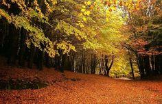 I colori autunnali di sua maestà l'Etna! E' un posto incredibile per fare passeggiate e immergersi nella natura, che ne dite? The Autumn colours of Her Majesty the Mount Etna! It's an amazing place to take walks and immerse yourself in nature, isn't it? #FoliageInItaly #Italia #Italy #IlikeItaly #autumn #autunno #foliage #visitsicily