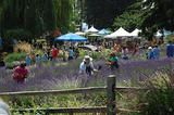 Oregon's Washington County - Events and Festivals Year-Round
