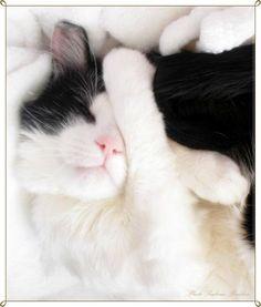 """,,Amíg meg nem tapasztaltuk, milyen érzés szeretni egy állatot, lelkünk egy része mélyen alszik.."""" / Antole France /"""