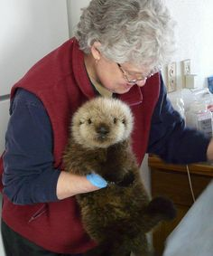 Otter pup gets veterinarian care by U.S. Fish & Wildlife Service, Alaska